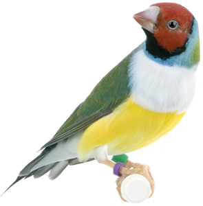 Harrison S Bird Food For Parakeets